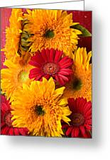 Sunflowers And Red Mums Greeting Card