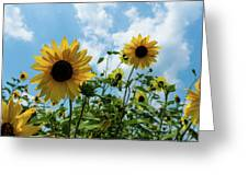 Sunflowers And The Bee Greeting Card