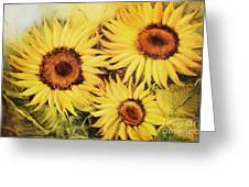 Sunflowers Greeting Card by Fatima Stamato