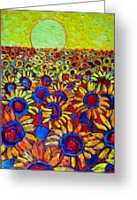 Sunflowers Field At Sunrise Greeting Card