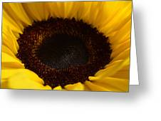 Sunflowers - Helianthus Greeting Card