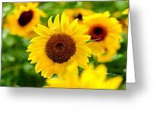 Sunflowers I Greeting Card