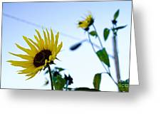 Sunflowers In Fall Greeting Card