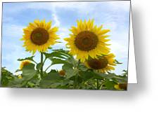 Sunflowers In Texas Summertime 1 Greeting Card