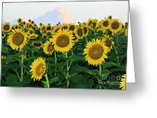 Sunflowers In The Clouds Greeting Card