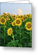 Sunflowers In The Sky Greeting Card