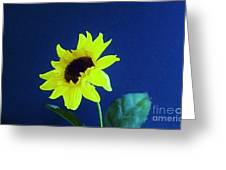 Sunflowers Look To The Sun Greeting Card
