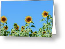 Sunflowers On Blue Greeting Card