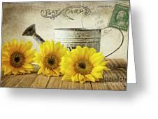 Sunflowers Postcard Greeting Card