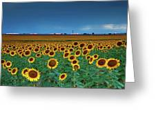 Sunflowers Under A Stormy Sky By Denver Airport Greeting Card