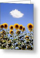 Sunflowers With A Cloud Greeting Card