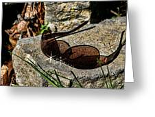 Sunglasses On Stone Greeting Card