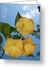 Sunglow Angel Trumpet Greeting Card