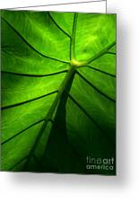 Sunglow Green Leaf Greeting Card