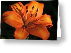 Sunkissed Lily Greeting Card