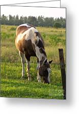 Sunkissed Tobiano Greeting Card