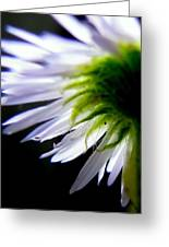 Sunlight And Daisies Greeting Card