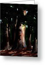 Sunlight And Shadows - Eucalyptus Majesties Greeting Card