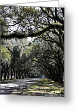 Sunlight And Shadows On Live Oaks Greeting Card