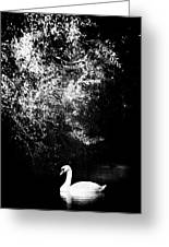 Sunlight And Swan  Greeting Card