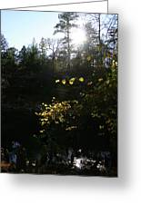 Sunlight At The River Greeting Card