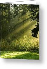Sunlight Greeting Card