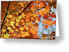 Sunlight In Maple Tree Greeting Card