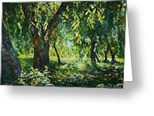 Sunlight Into The Willow Trees Greeting Card