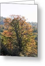 Sunlight On Autumn Foliage Greeting Card
