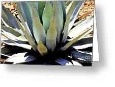 Sunlight On Blue Agave - Digital Art Greeting Card