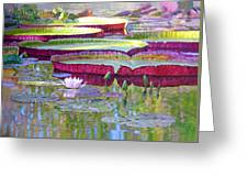 Sunlight On Lily Pads Greeting Card