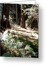 Sunlight On Path Greeting Card