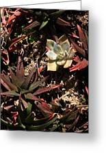 Sunlight On Succulents Greeting Card