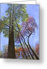 Sunlight On Upper Branches Greeting Card by John Lautermilch