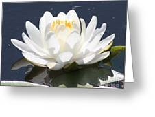 Sunlight On Water Lily Greeting Card
