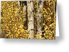 Sunlight Shines On Golden Aspen Leaves Greeting Card by Charles Kogod