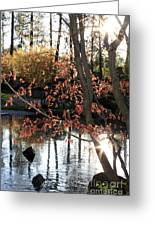 Sunlight Through Japanese Maple Greeting Card