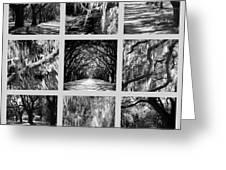 Sunlight Through Live Oaks Collage Greeting Card