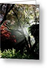 Sunlight Through The Tree In Misty Morning 1. Greeting Card