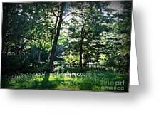Sunlight Through Trees And Fence Greeting Card