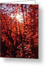 Sunlight Thru Autumn Leaves Abstract Greeting Card