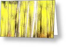 Sunlit Aspen Grove Greeting Card