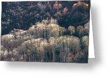 Sunlit Bare Autumn Aspens 1 Greeting Card