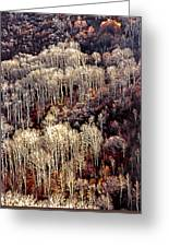 Sunlit Bare Autumn Aspens 2 Greeting Card
