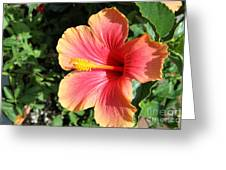 Sunlit Beauty Greeting Card
