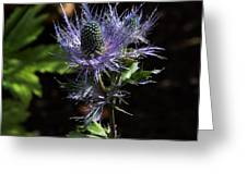 Sunlit Bloom Of Alpine Sea Holly Greeting Card