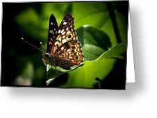 Sunlit Butterfly Greeting Card