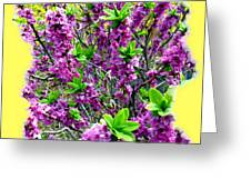 Sunlit Daphne Greeting Card