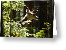 Sunlit Deer Friend Greeting Card