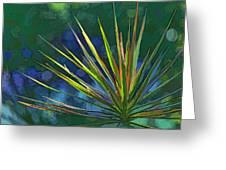 Sunlit Dracaena Marginata Greeting Card